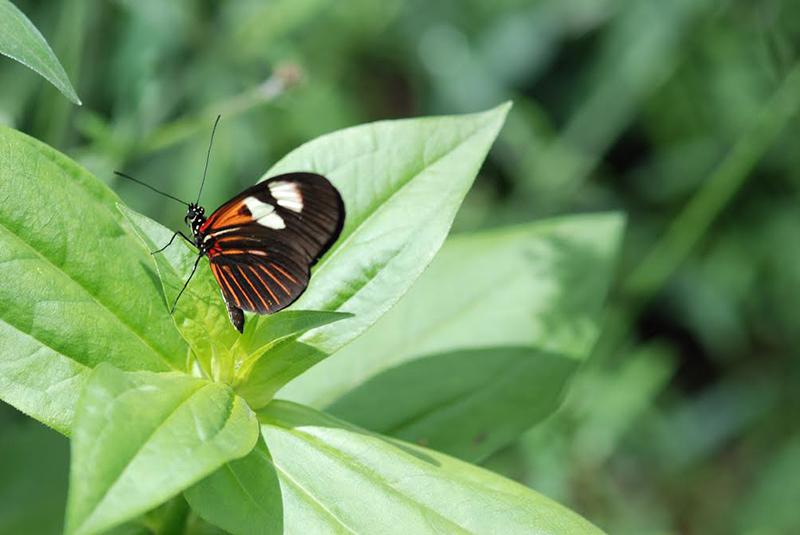 A broken wing but not a broken spirit as this beautiful exotic butterfly still flies with abandon despite his limitations.–Gail Diez