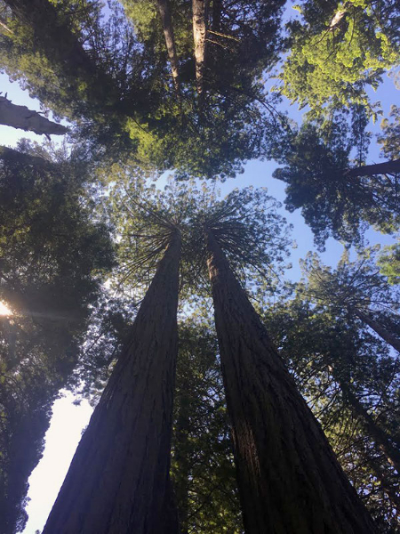 Without a covenant, however informal it may be, between Man and Trees, would we still be walking together? –Laurie Kigner